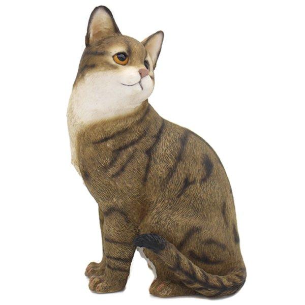 CAT SITTING TABBY