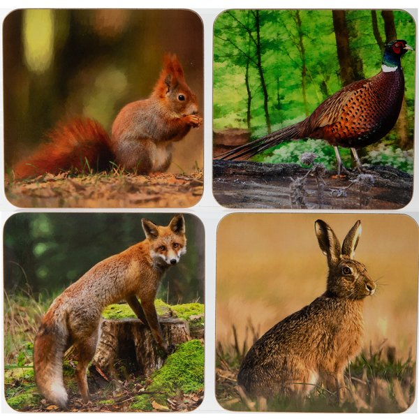 WILDLIFE COASTERS 4 ASST