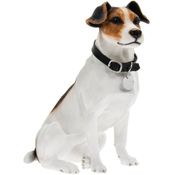JACK RUSSELL SITTING
